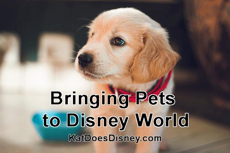 Bringing Pets to Disney World