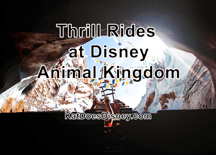 Thrill Rides at Disney Animal Kingdom